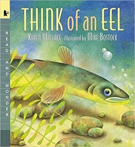 Think of an Eel cvr