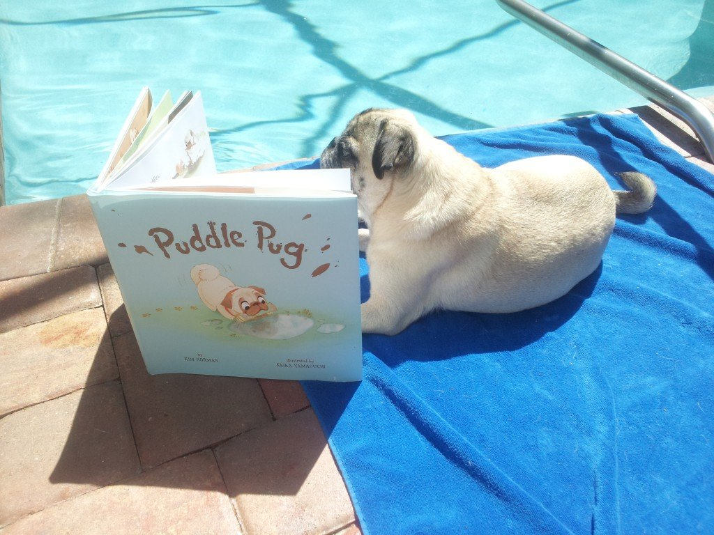 Pug-reading-by-pool-SterlingPub.jpg