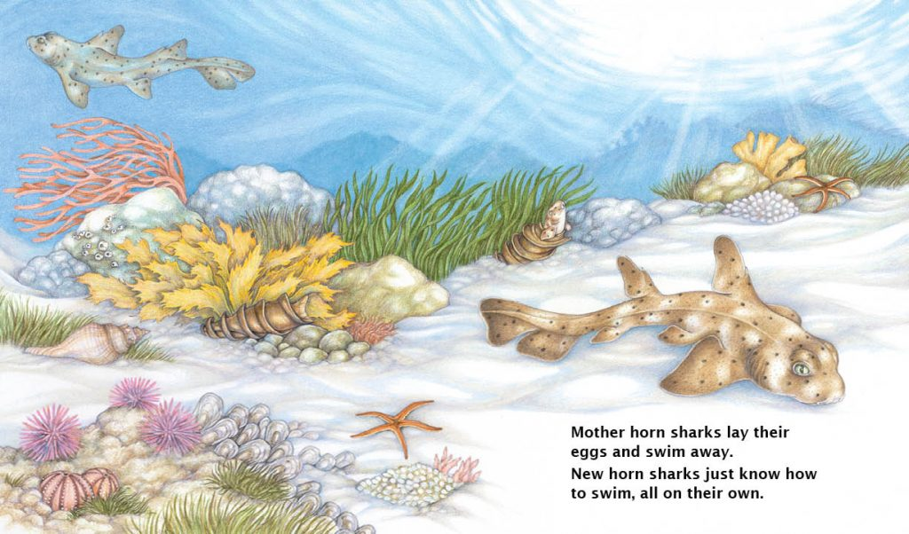 They Just Know: Animal Instincts Interior spread of horn shark