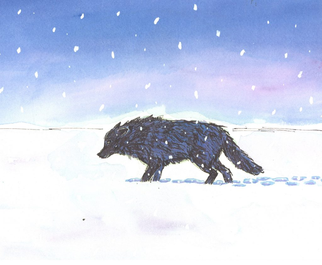 Interior image of wolf from Wolf in the Snow by Matthew Cordell