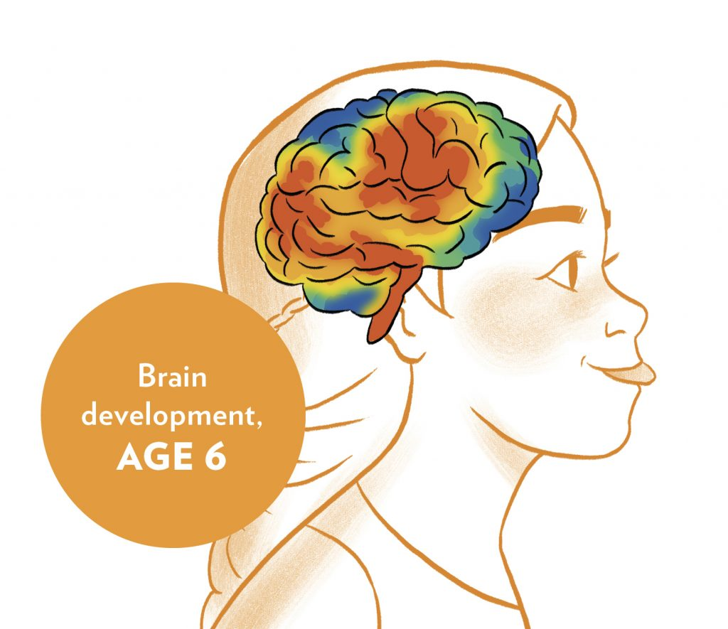 int image Brain Development Age 6 from HELLOFLO: THE GUIDE, PERIOD.