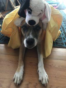 Ozma Bryant dog Rugged and plush toy photo