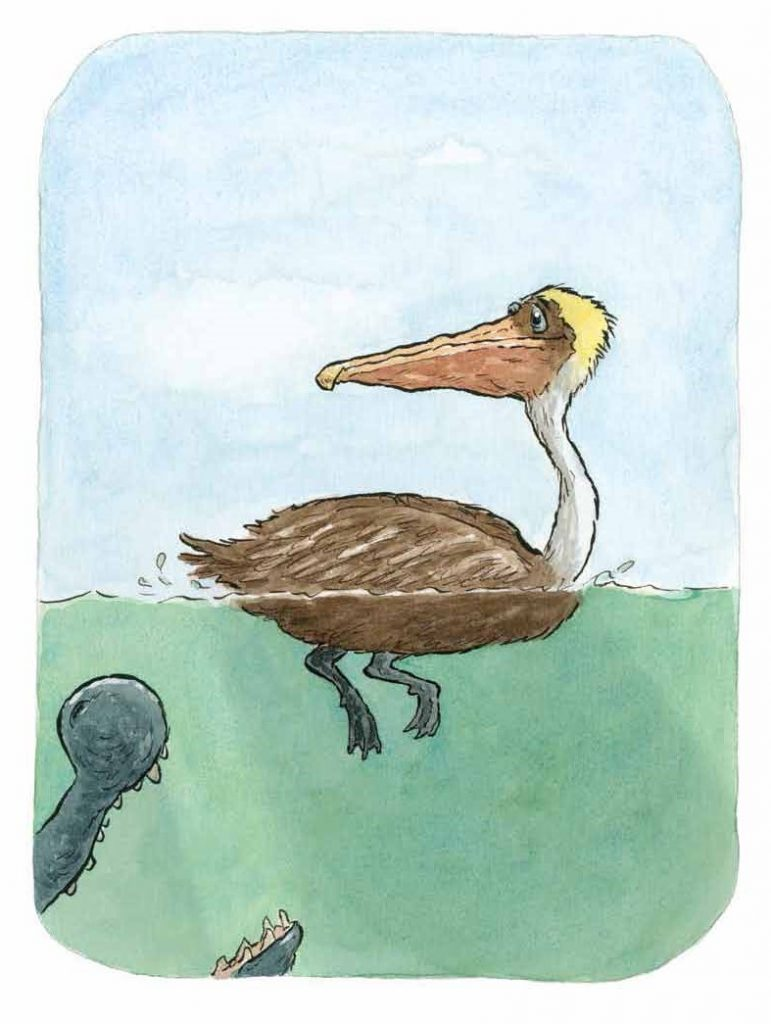int art of pelican from There Was an Old Gator Who Swallowed a Moth