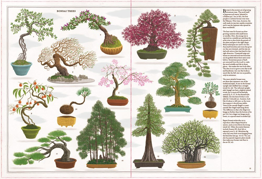 interior spread of bonsai from Trees: A Rooted History