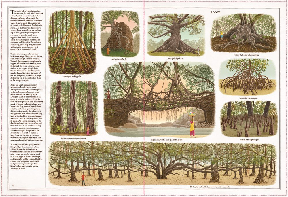 int illustration from Trees: A Rooted History Abrams BYR